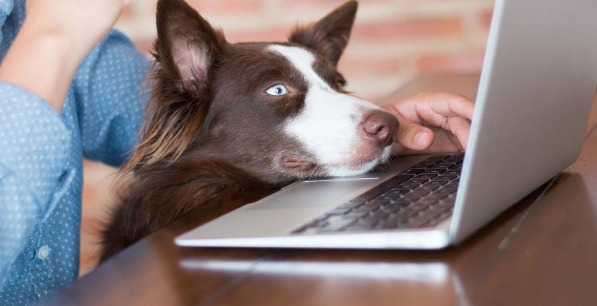 A woman working on her computer at her house with her dog looking at the screen of her laptop really interested.