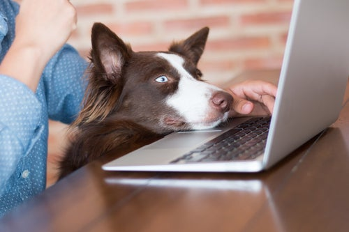 Dog resting his face on laptop computer